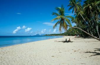 Utiliser vos 5 sens sur l'île de la Martinique