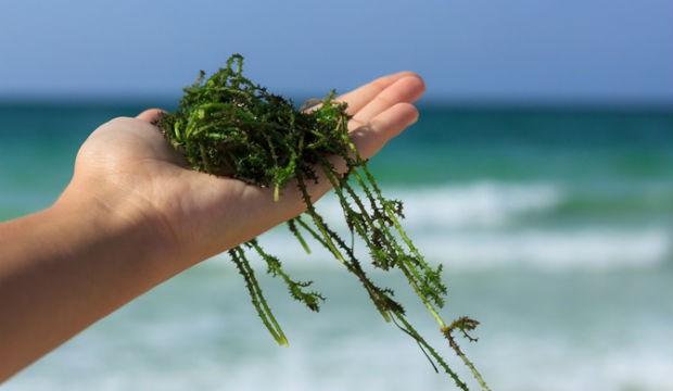 Les algues sargasses au cœur du Symposium UWI