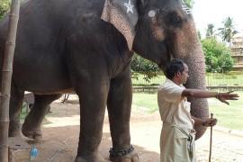 """Stop à """"l'elephantourism"""" place au tourisme éthique"""
