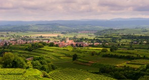 [Top] Des destinations exotiques pour les amateurs de vin