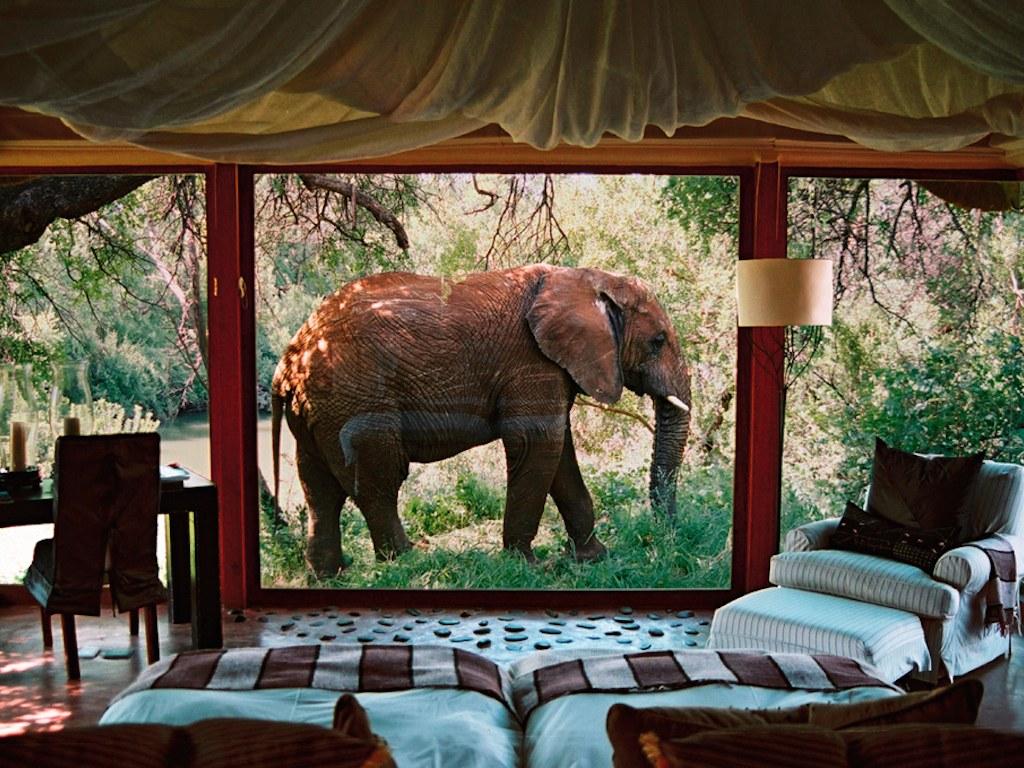 Top des h tels pour dormir avec les animaux profession voyages - Dormir au milieu des animaux ...