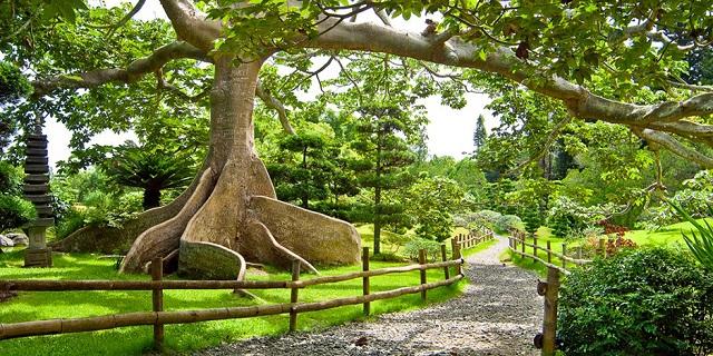 jardin-botanique-saint-domingue