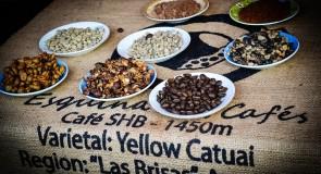 Nicaragua : La Route du café, nouvel attrait touristique !