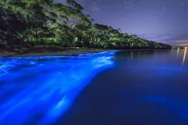 Découvrez l'éclat magique de Mosquito Bay