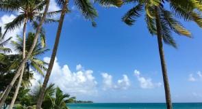 Visiter la Martinique : que faire et que voir sur l'île aux fleurs ?