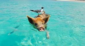 Mon rêve : Les Bahamas