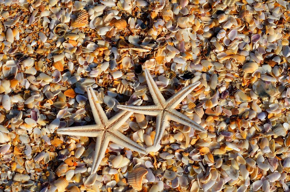 la plage de Shell Beach