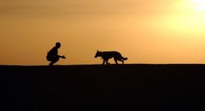 5 escapades à faire avec son chien au Québec