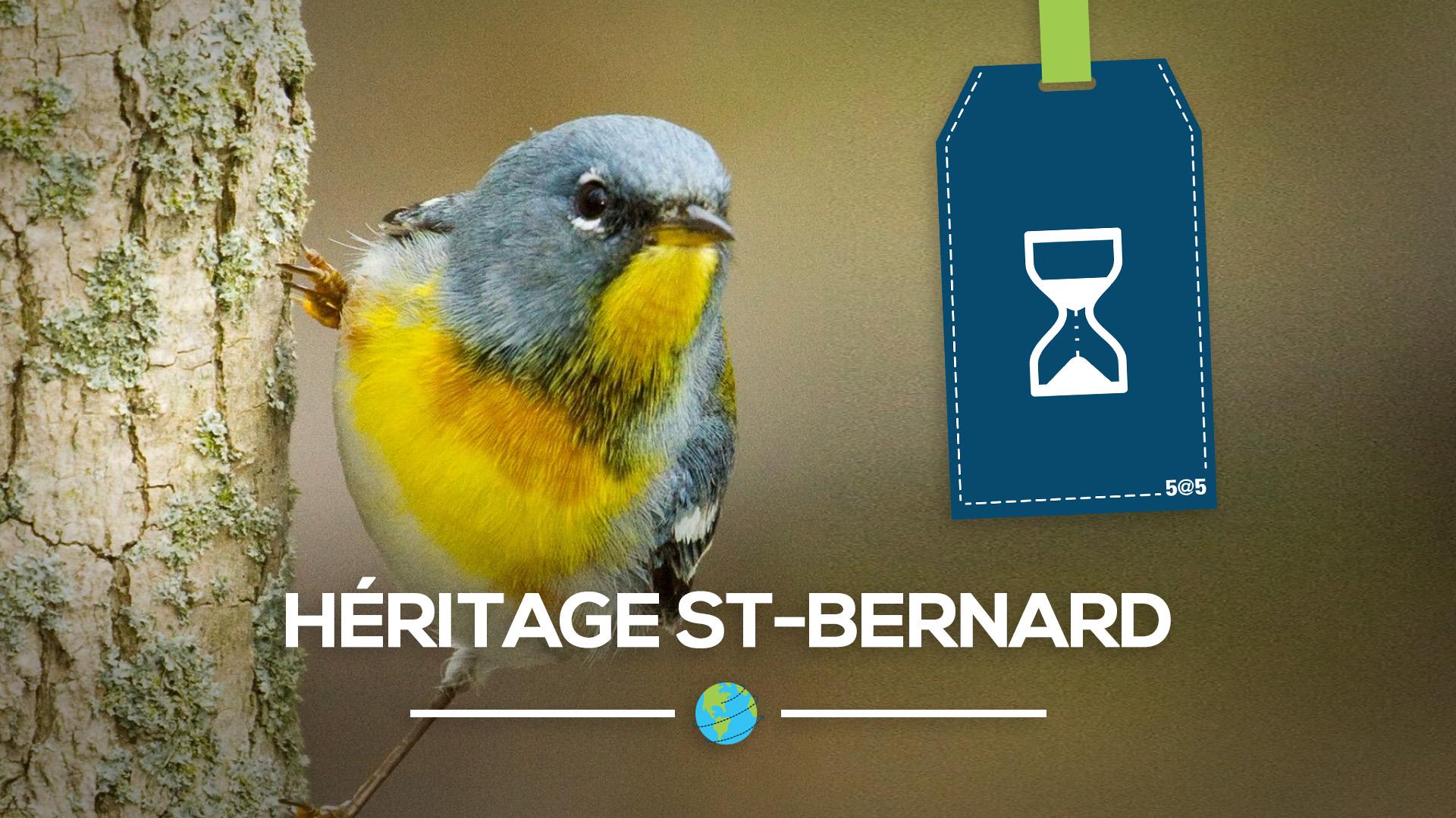 heritage saint bernard au quebec