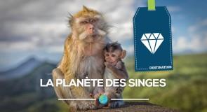 La planète des singes: où rencontrer nos frères primates?