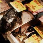 marché poisson tokyo japon