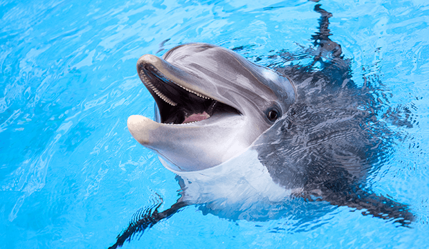 La ville de Mexico interdit les delphinariums