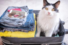 Air Transat vous autorise à voyager en cabine avec votre animal