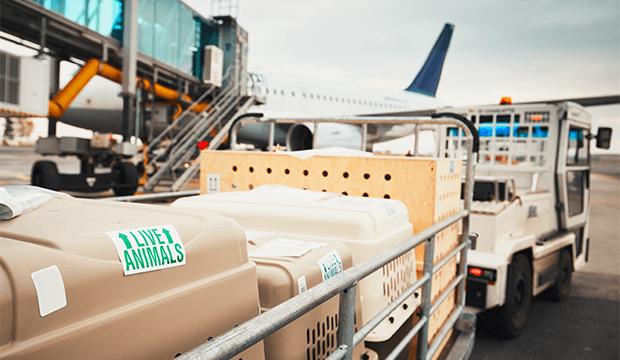 Transport des animaux vivants: Air Canada Cargo est la première société aérienne à recevoir une certification de l'IATA