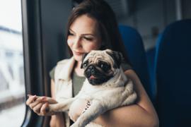 VIA Rail accueille les animaux de compagnie à bord de ses trains du Corridor Québec-Windsor