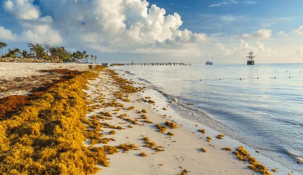Le Mexique va construire de nouveaux bateaux pour lutter contre les algues sargasses
