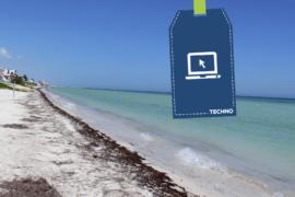 Des cameras en direct vous montrent la présence des sargasses sur les plages Mexicaines
