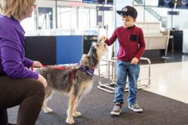 L'Escouade Câline YUL: L'animation canine débarque à Montréal-Trudeau!