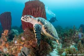 Martinique: un vrai paradis pour les plongeurs
