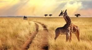 La Tanzanie lance son e-visa et part à la conquête du marché québécois!