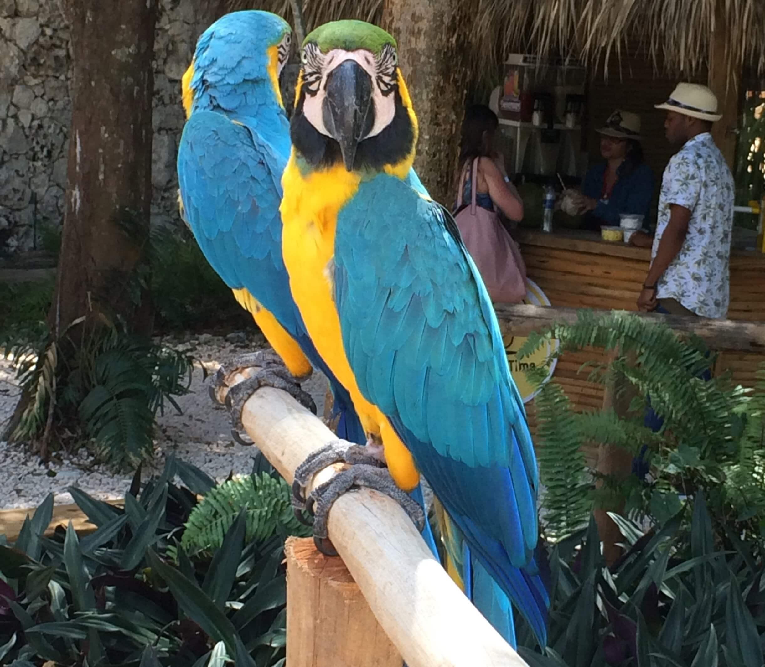 perroquet scape park at cap cana