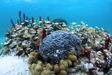 02.25_web_coralfishes