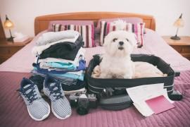 Air Transat assouplie sa politique pour le voyage des animaux en cabine