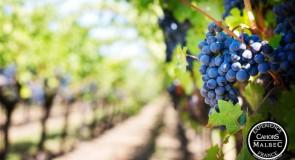 Visiter la France à travers ses vignobles: La région Cahors