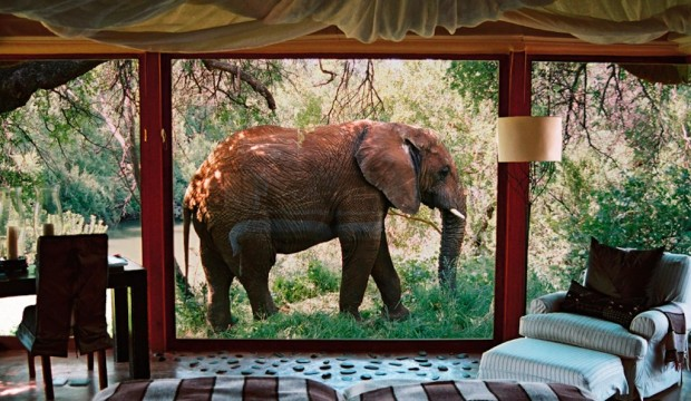 [Top] Des hôtels pour dormir avec les animaux