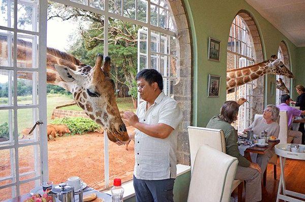 hotel avec girafe au kenya