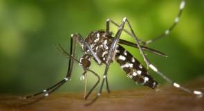 Le Zika n'est plus une préoccupation pour Sainte-Lucie: les femmes enceintes peuvent s'y rendre