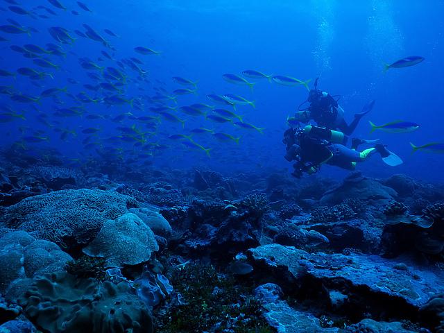 Underwater Photographer with Yellowback Fusiliers, Christmas Island, Republic of Kiribati