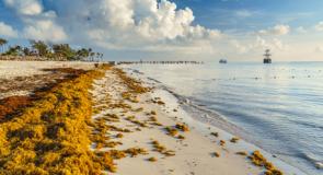 Mexique: Bahia Principe réduit de 95% la présence d'algues sargasses dans ses complexes hôteliers