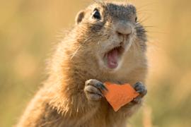 Débarquée de l'avion à cause de son écureuil de soutien émotionnel…