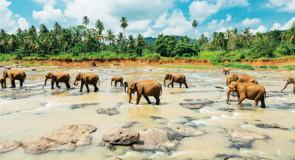 [Brochure] Tours Chanteclerc: de nouveaux itinéraires au Sri Lanka, en Chine et en Arménie