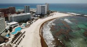 Arrivée massive d'algues sargasses sur les plages de la zone hôtelière de Cancún