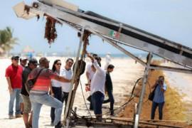 Mexique: le gouvernement prévoit de nouvelles actions et moyens financiers pour éradiquer les algues sargasses à Cancun et sur la Riviera Maya