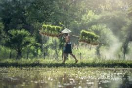[Éducotour] Découvrir le Cambodge et le Vietnam du Sud!