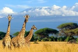 VOYAGEZ DE LA MAISON : Direction l'Afrique!