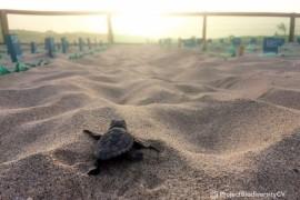 RIU soutient le Cap-Vert, qui enregistre en 2020 un record historique de nids de tortue