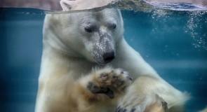 L'Aquarium du Québec a rouvert ses portes!